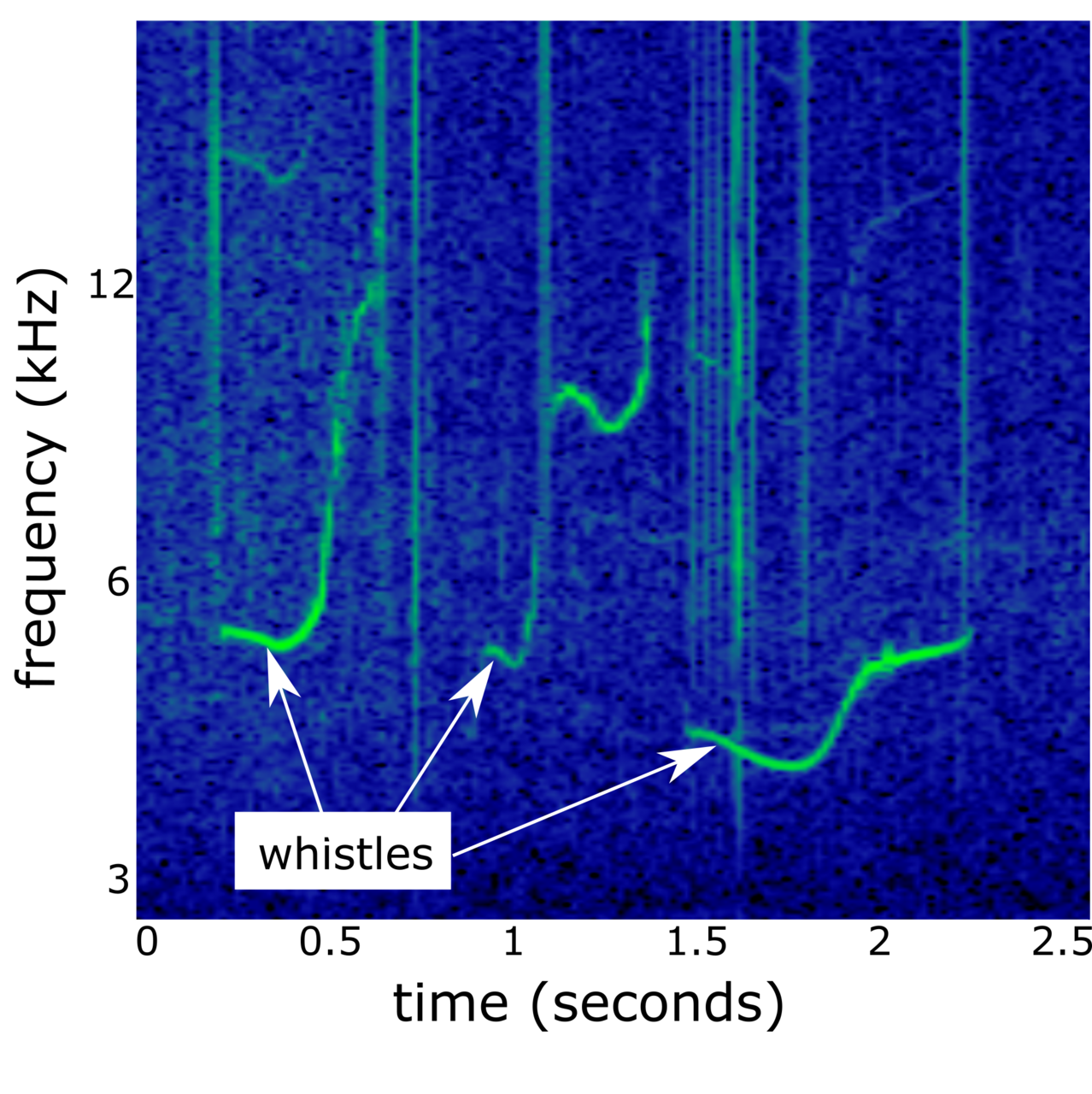 Spectogram of false killer whale whistles.
