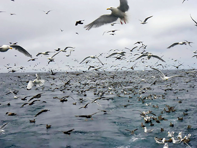 Seabirds flock around our boat, circling us, and following in our wake.