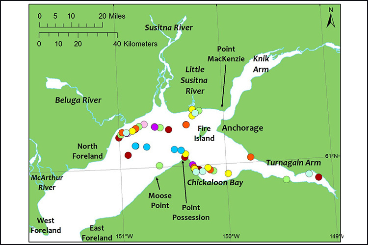 Where we observed beluga whale groups in Cook Inlet, each color represents a survey day.