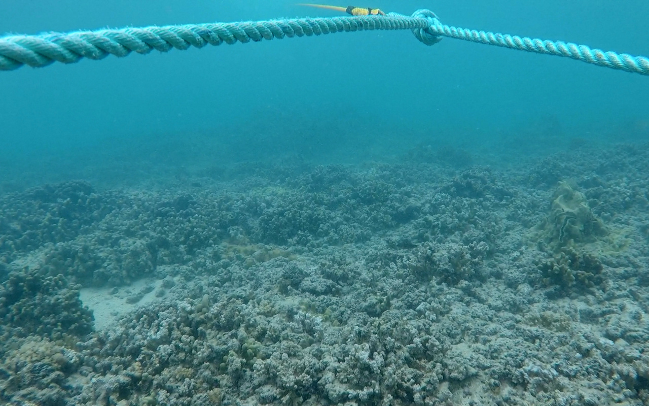A marine debris diver's view of the reef while towboarding