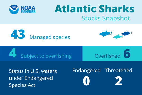 Atlantic Sharks Stocks Snapshot