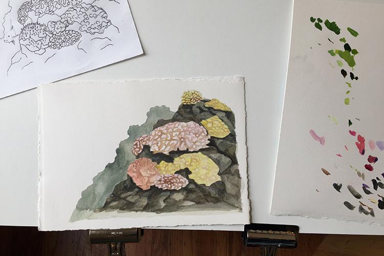 750x500-sketches-painting-corals-rachel-strader-1.jpg