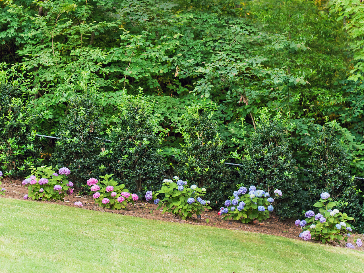 A rainbow of hydrangea decorates the edge of the lawn.