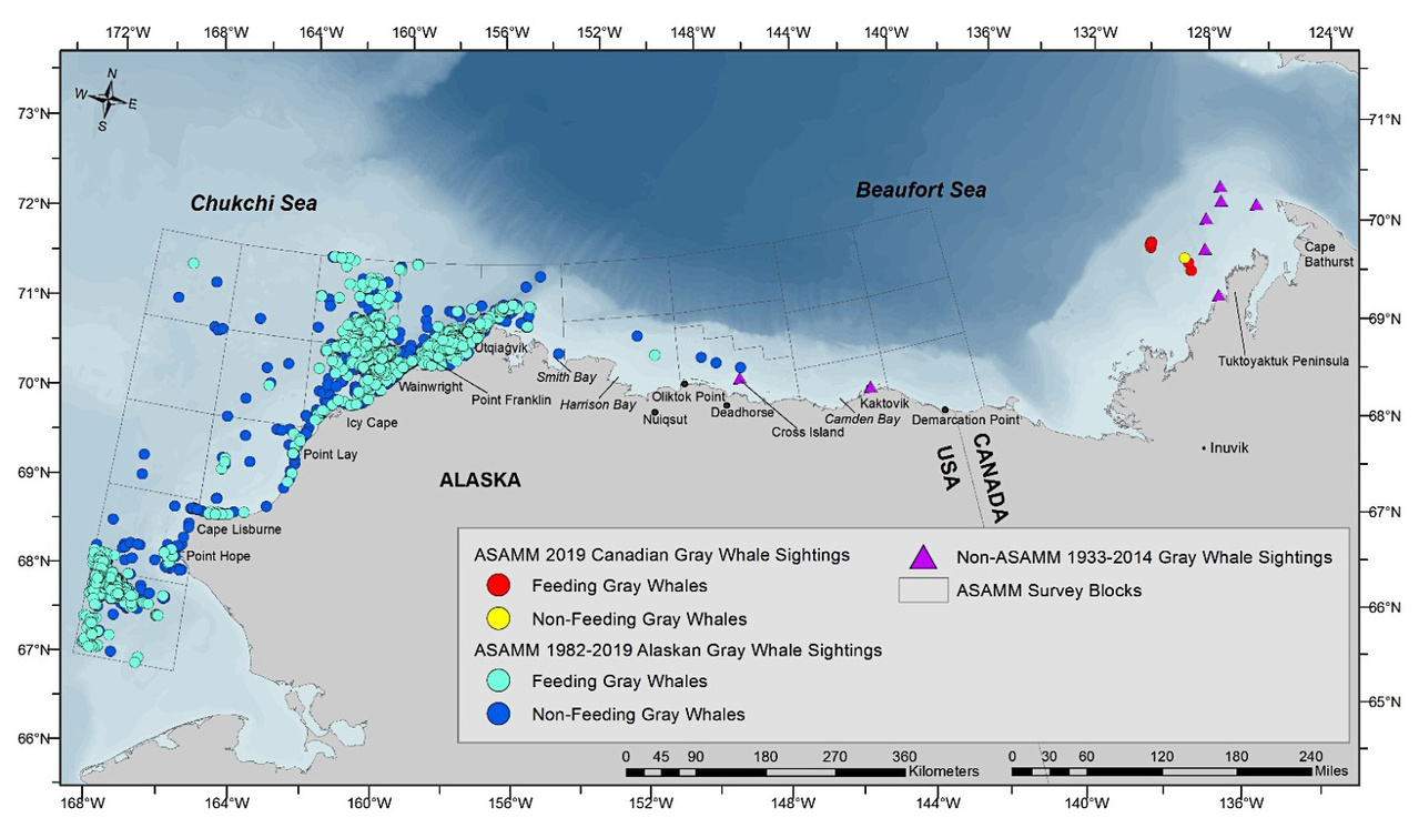 Map of ASAMM 1982 – August 2019 gray whale sightings in the Chukchi and Beaufort seas, and all recorded non-ASAMM gray whale sightings in the Beaufort Sea.