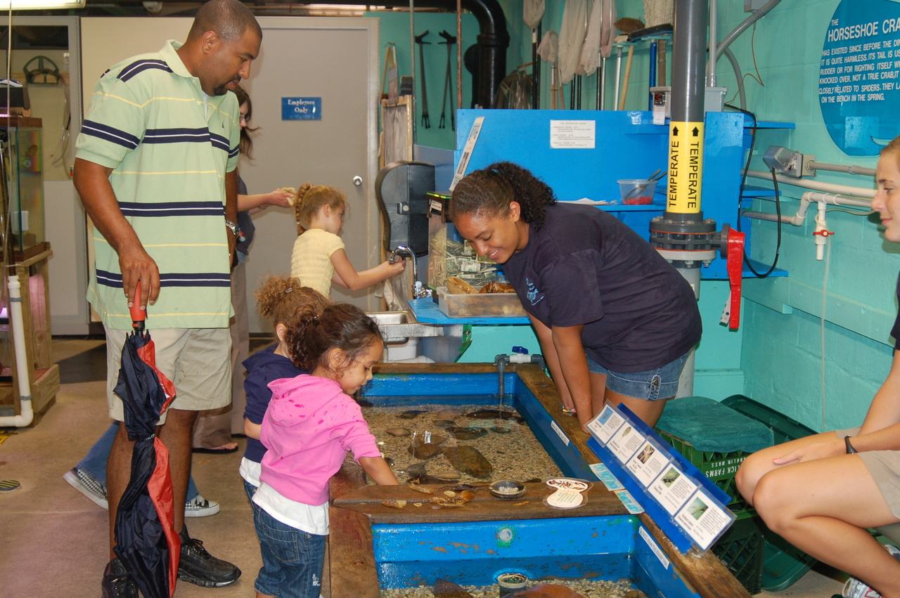 children and father looking at touch tank with volunteer's help