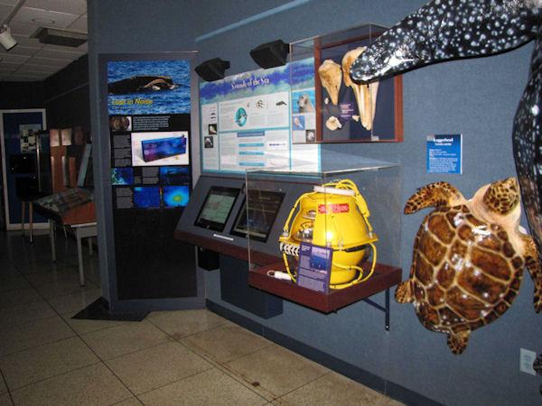 Sounds of the Sea exhibit in aquarium featuring large turtle