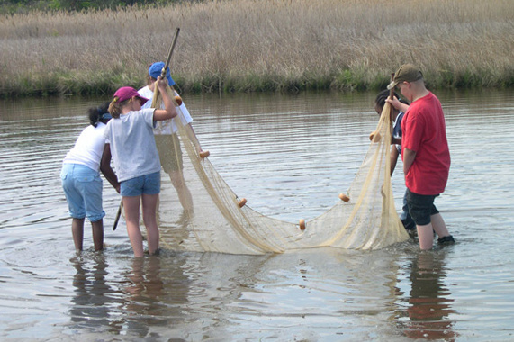 Students with a net in a creek