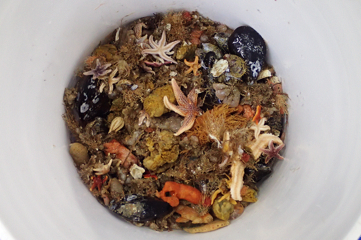 Benthic invertebrates collected off Chatham, Massachusetts in the NEFSC fall bottom-trawl survey.png