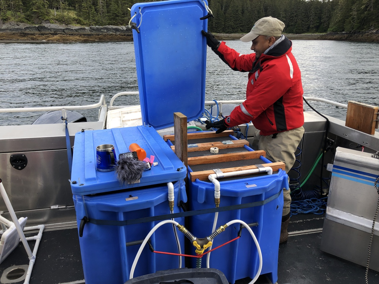 Transporting live juvenile cod to Auke Bay Laboratories.
