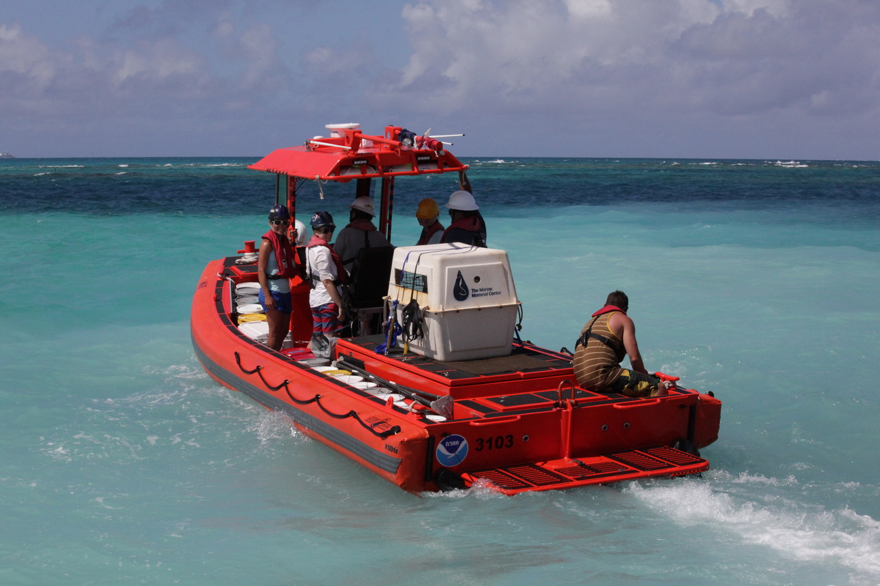 Small boat transports a malnourished Hawaiian monk seal pup from French Frigate Shoals