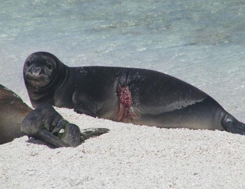 500x385-pup-shark-bite-healing.jpg.jpg