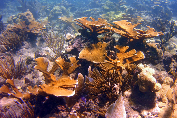 Underwater photo of several large corals