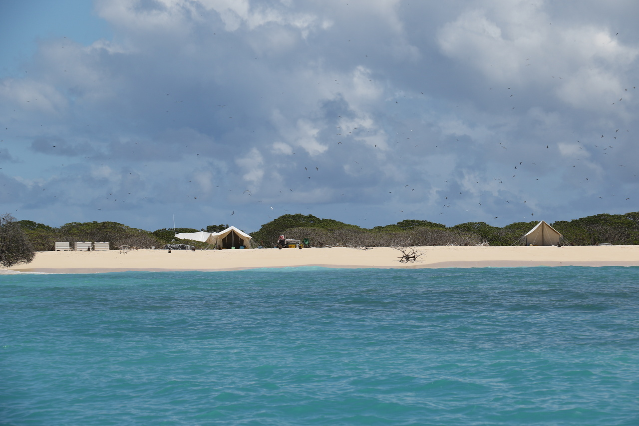 Field camp at Lisianski Island, Northwestern Hawaiian Islands.