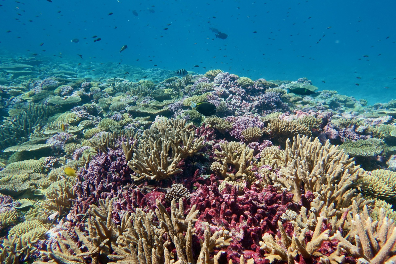 Corals thrive and support a wide diversity of reef fish in the sunny, shallow water at Baker reef.