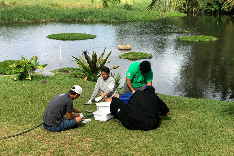 Project participants catching, collecting data, and preparing fish meals at fishpond.