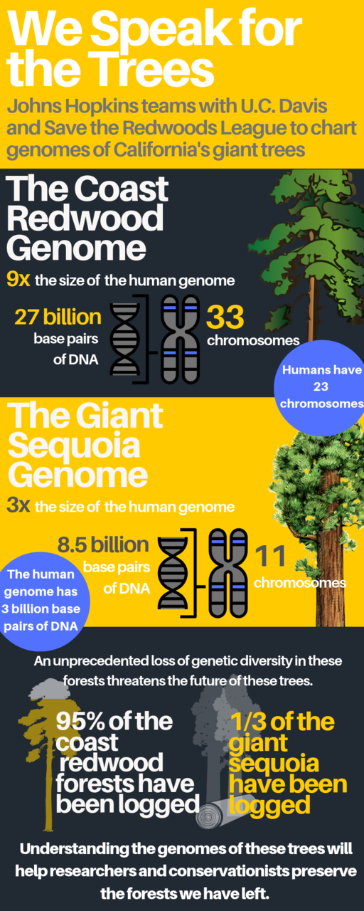 4-23-19 Johns Hopkins Researchers Sequence Coast Redwood and Giant Sequoia Mega-Genomes.png