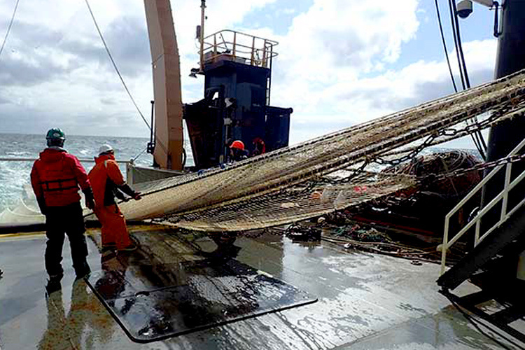 Southeastern Bering Sea Survey, Scientists working with fishing nets