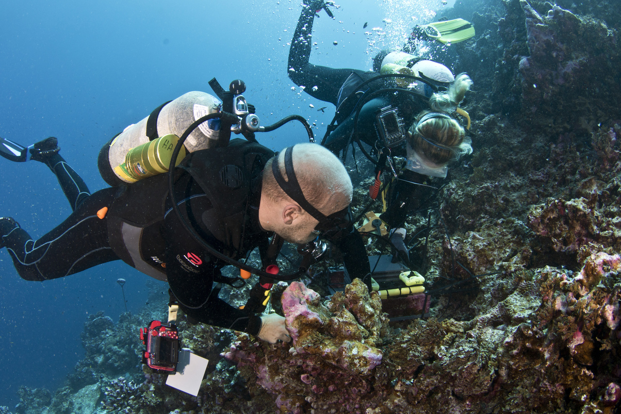 Scientists swap out an underwater temperature logger that has been recording data for three years at Jarvis Island. This logger was recording during the largest warming event yet observed on a coral reef (2015 El Nino). Using many of these instruments around Jarvis at different depths allows us to gauge how thermal exposure drives change in the reef community. (Photo: NOAA Fisheries/Jeff Milisen)