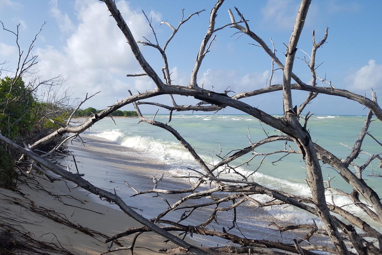 St. Croix nesting leatherback beach showing erosion.