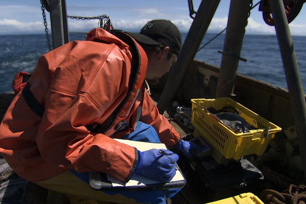 FisheriesObserver.jpg