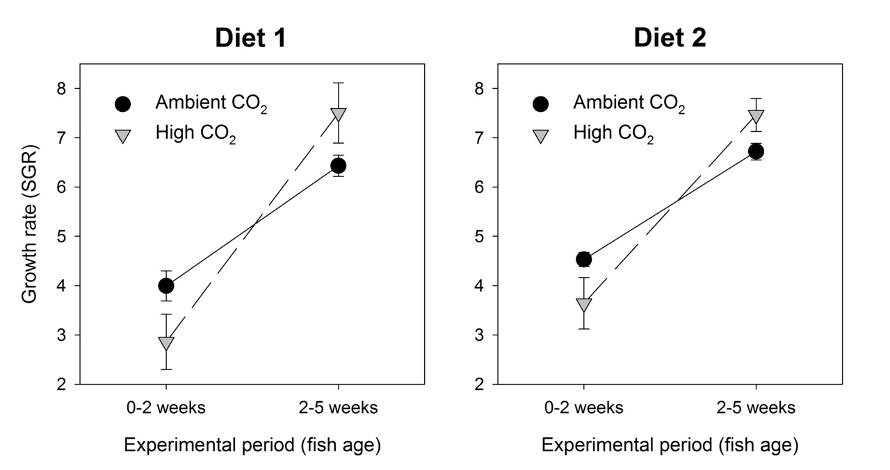 Growth rates of larval Pacific cod during the first 5 weeks of life reared on 2 diets at ambient and elevated CO2 levels. Figure is redrawn from data presented in Hurst et al. 2019. Elevated CO2 alters behavior, growth, and lipid composition of Pacific cod larvae. Marine Environmental Research.