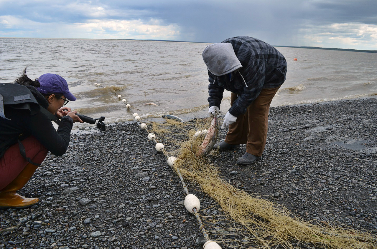 Jean Lee filming Connie Timmerman picking fish from her subsistence salmon net on Kanakanak Beach (photo by Anna Lavoie)