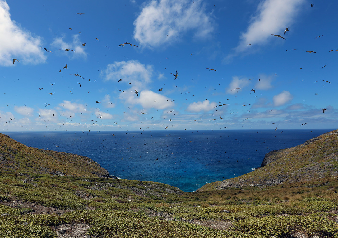 Seabirds at Nihoa.