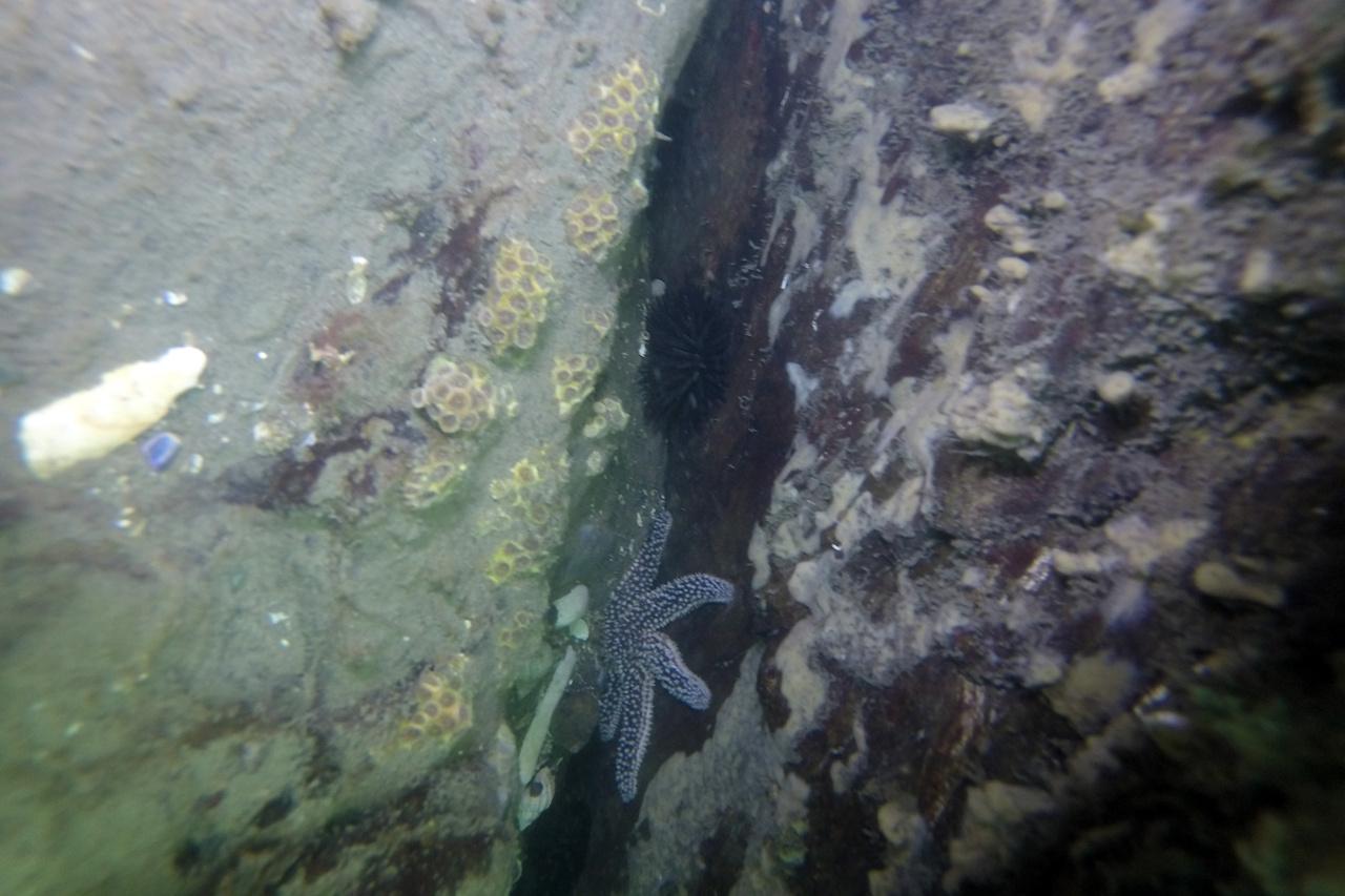 fragmented-coral-milford-nefsc.jpg