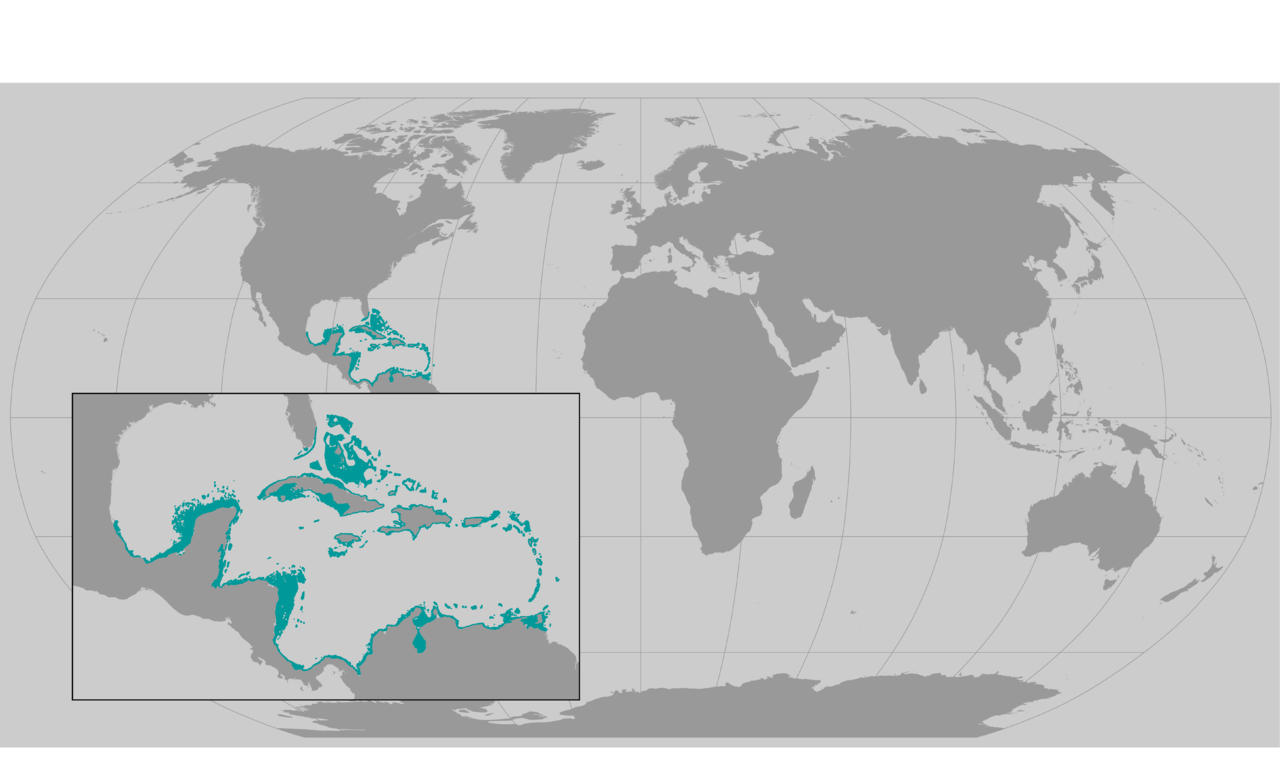 staghorn coral map