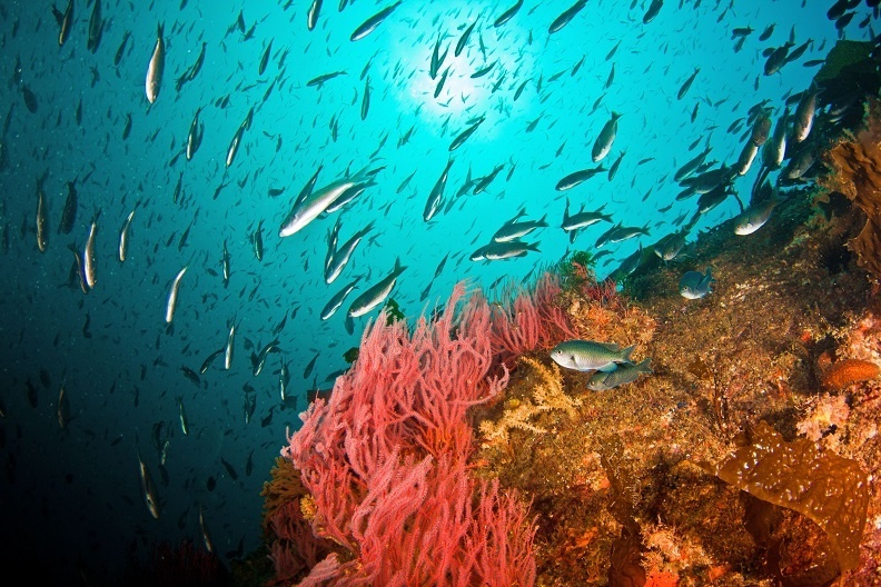 school of fish around coral reef