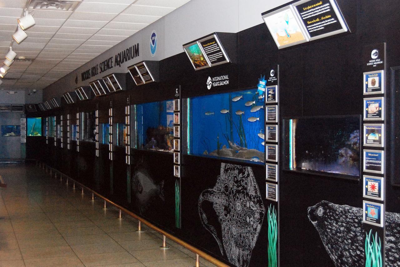aquarium gallery with tanks