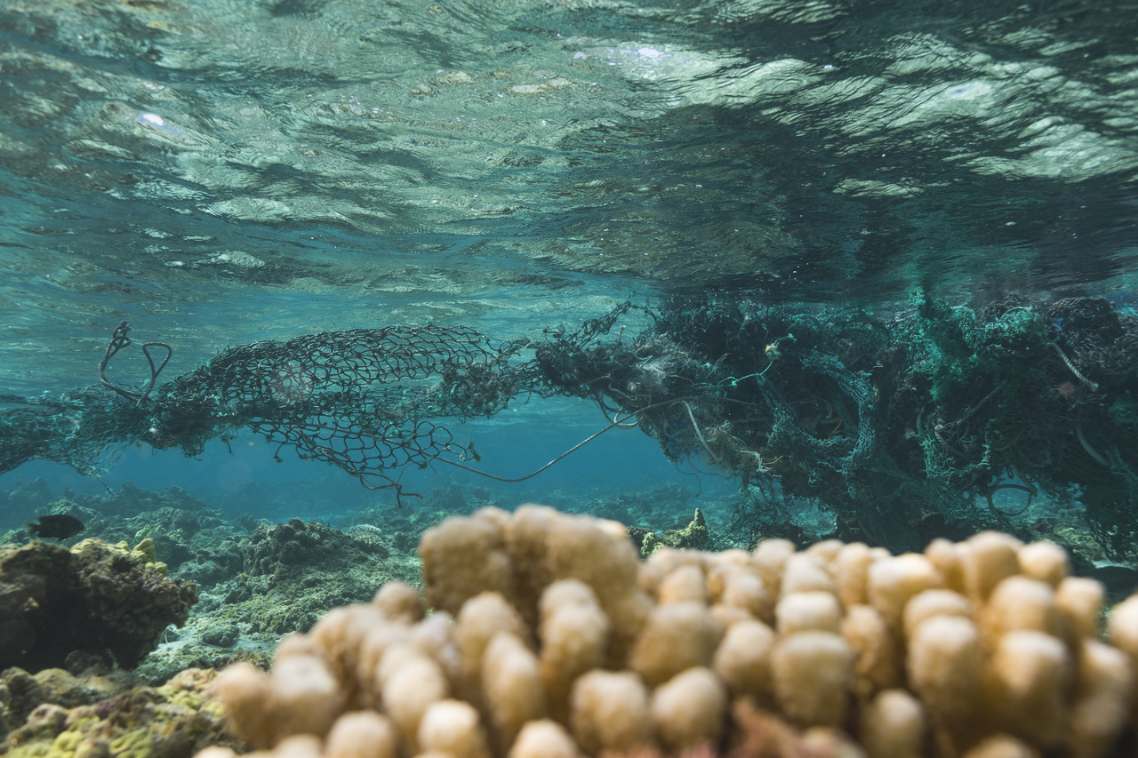 Derelict nets can damage coral reefs
