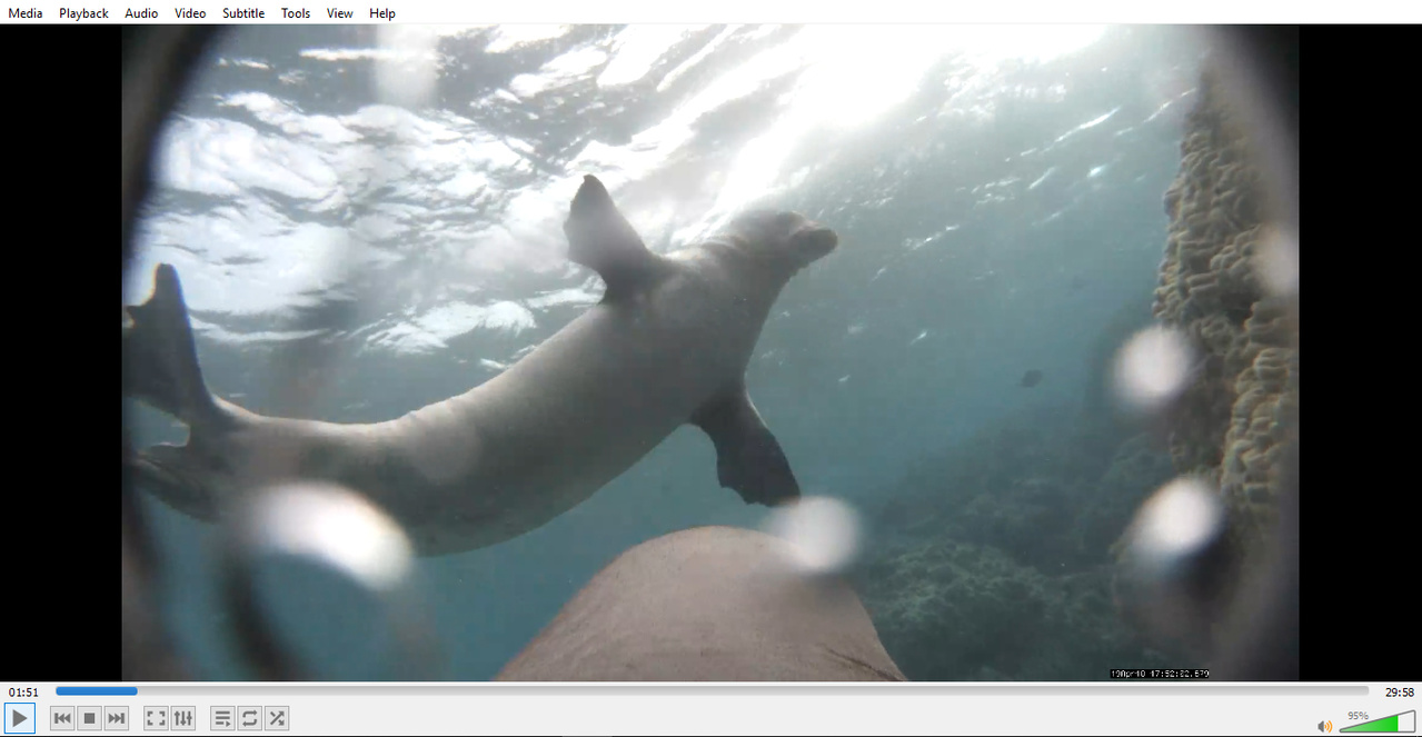 Photo from camera tag that was attached to Hawaiian monk seal YW29