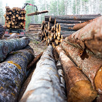 Forestry & Logging