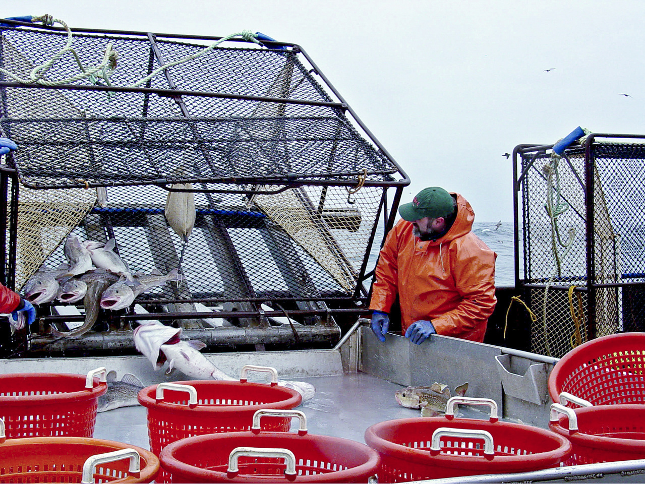NOAA Fisheries scientists collect Pacific cod samples in the Aleutian Islands.