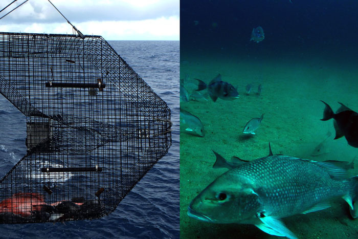 Adding video cameras to fish traps allows scientists to get more precise estimates of fish abundance. Credit: NOAA.