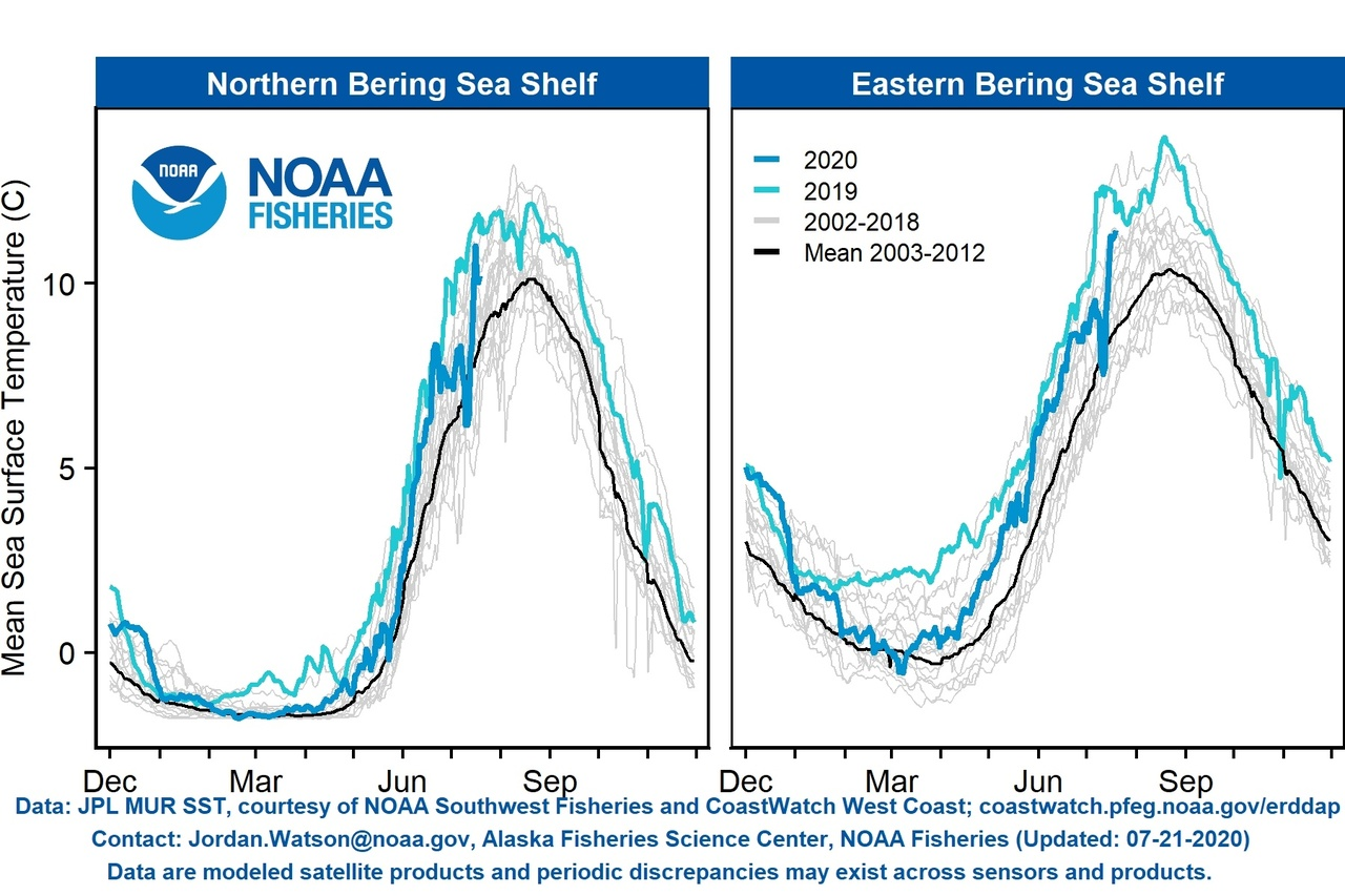 Graph showing comparisons of mean sea surface temperatures in the northern Bering Sea shelf and eastern Bering Sea shelf from 2002-2020.