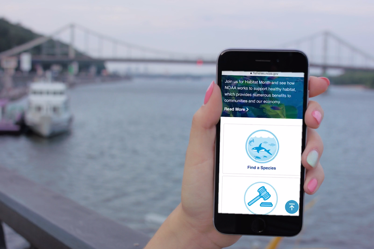 Screenshot showing hand holding smartphone using the NOAA Fisheries website.