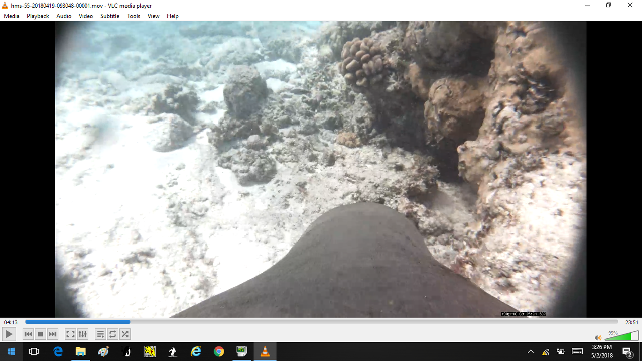 View from video camera on back of Hawaiian monk seal. Top  of seal's head and coral and sandy substrate.