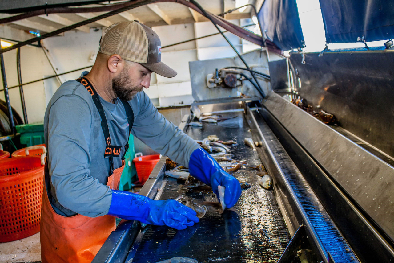 Man standing at table sorts fish on a vessel