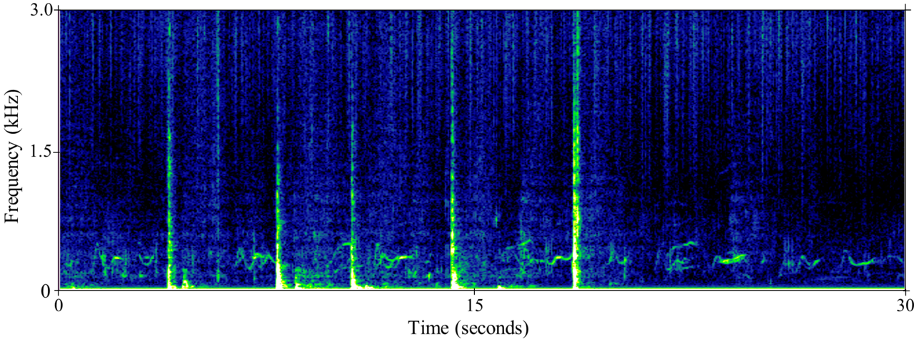 spectrogram of humpback whale song and other sounds