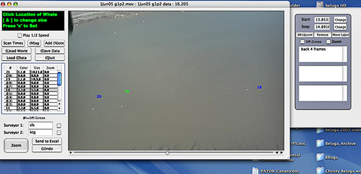 "Screenshot of ""Beluga Dots"" program used to catalog individual beluga whale images found in the Cook Inlet survey video."