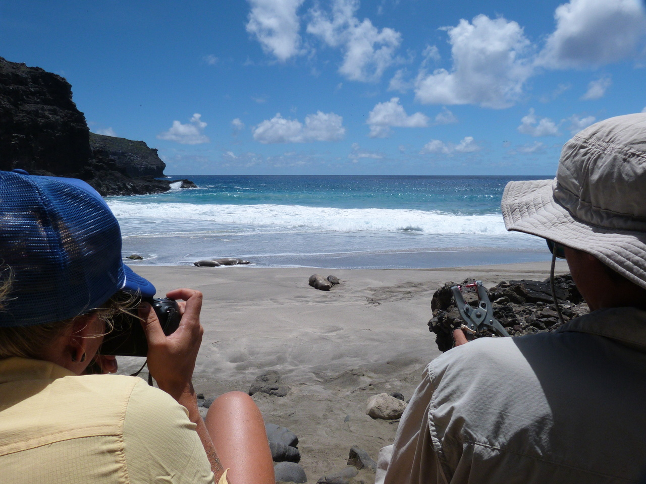 Field biologists conduct a monk seal population census and assessment