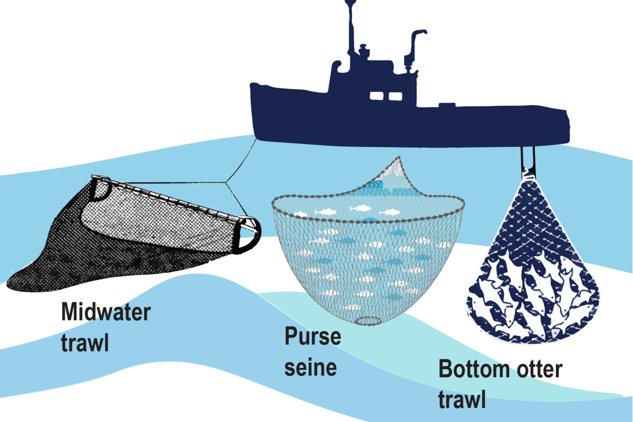 Illustration showing fishing gear: midwater trawl, purse seine and bottom otter trawl.