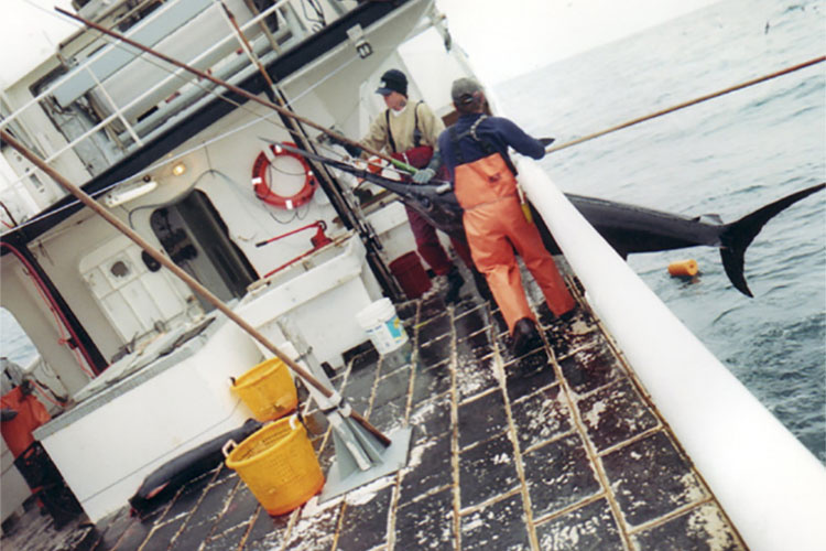 Swordfish being hauled onto a boat.