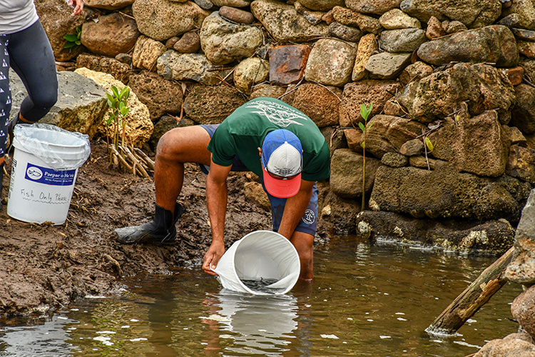 A man in a hat holds a bucket over water as he prepares to dump live fish into the pond.