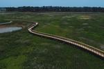 Aerial view of boardwalk in marsh