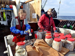 Leah Zacher and Ben Sipos chopping herring and filling bait jars.
