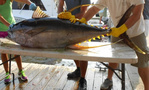 yellowfin tuna on table