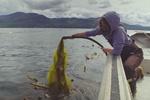 Alaska kelp farming